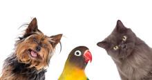 Many Pets Isolated