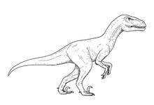 Drawing Of Dinosaur - Hand Ske...