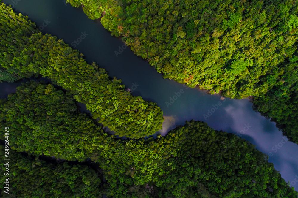 Fototapety, obrazy: Tropical rain forest mangrove river and green tree on island
