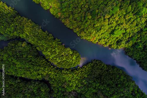 Poster Rivière de la forêt Tropical rain forest mangrove river and green tree on island