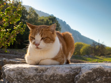 Cat Crouching On The Stone At Ephesus, The  Ancient City, Selcuk Town, Izmir Province, Turkey