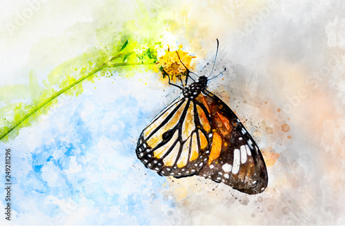 Fotografie, Obraz  Watercolor art painting of colorful butterfly