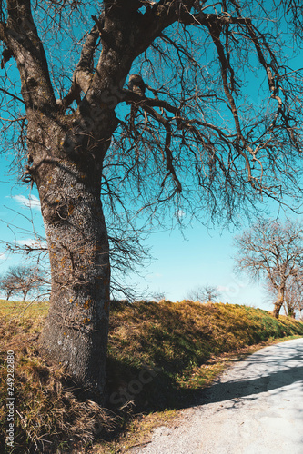 Spoed Foto op Canvas Grijze traf. Beautiful landscape in winter day, trees on the dirt road and blue sky