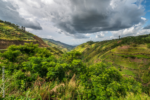 Fotografía  Beautiful landscape in southwestern Uganda, at the Bwindi Impenetrable Forest National Park, at the borders of Uganda, Congo and Rwanda