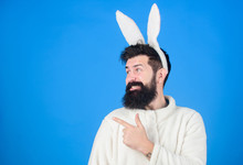 Funny Bunny Man With Beard And...