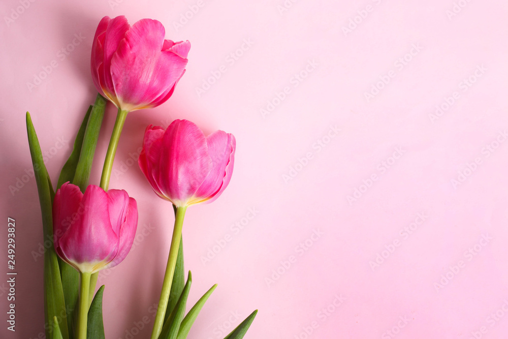 Fototapety, obrazy: Bouquet of beautiful pink tulips