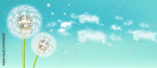 Fototapeta Spring dandelion flower Vector realistic. Sky background soft bokeh illustrations obraz