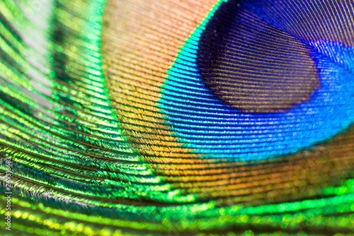 Fotografie, Obraz  Pfauenfeder, Blauer Pfau (Pavo cristatus), Detailaufnahme, Pfauenauge, Niedersac