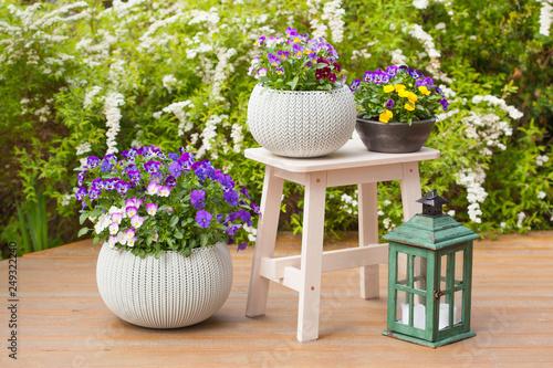 Photo  beautiful pansy summer flowers in flowerpots in garden