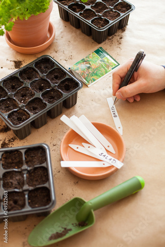 Fotografie, Obraz gardening, planting at home. man sowing seeds in germination box