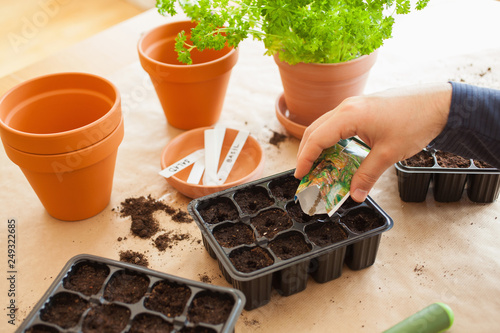Fotografia gardening, planting at home. man sowing seeds in germination box