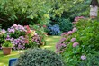Leinwanddruck Bild - Beautiful garden with hydrangeas in Brittany