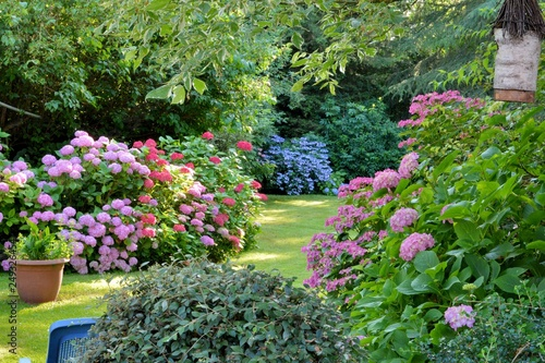 Garden Poster Garden Beautiful garden with hydrangeas in Brittany