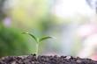 small tree sapling plants planting with dew