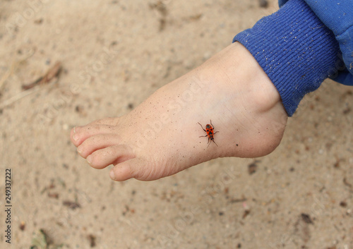 Foto  ladybird bug on baby leg