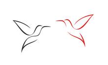 Hummingbird Logo. Isolated Hummingbird On White Background. Outline