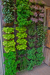 canvas print picture - A vertical herb garden in a small urban garden space with range of herb vaieties