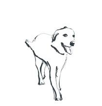Hand Drawn Dog Sketch. Monochrome Logo. Ilustrations
