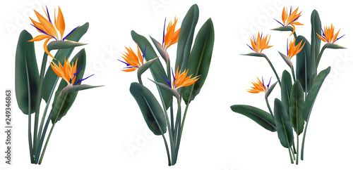 Fototapeta Strelitzia Reginae tropical flower bouquets set obraz na płótnie