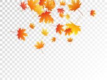 Maple Leaves Vector Illustration, Autumn Foliage On Transparent Background.
