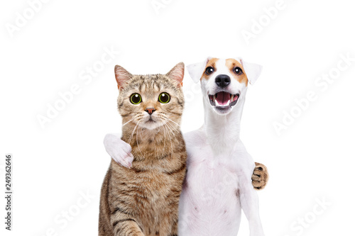 Portrait of a dog Jack Russell Terrier and cat Scottish Straight hugging each ot Canvas Print