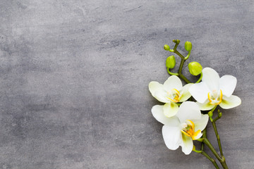 Piękno orchidea na szarym tle. Scena spa.