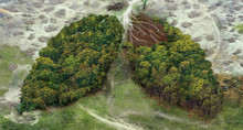 Deforestation Human Lungs