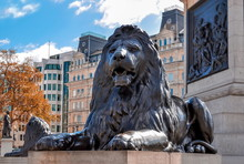 Trafalgar Square Lion At Nelson Column, London, UK