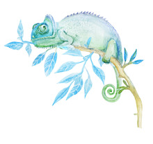 Chameleon Watercolor Drawing