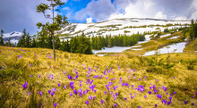 Spring Mountains Panorama With...