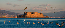 A Flock Of Seagulls Flying On Sunset Time On Castel Dell'Ovo Background Over The Sea In Naples, Italy. Egg Castle. Travel In Europe Concept. Copy Space. Selective Focus On Castle.