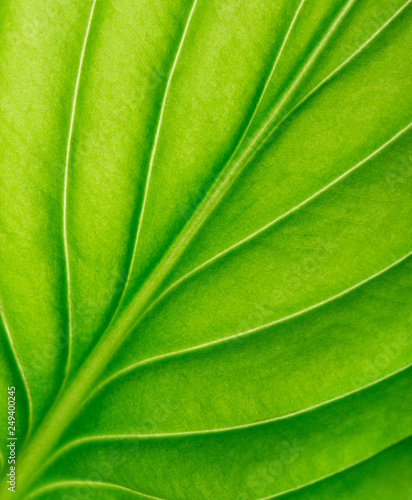 Photo Texture of a green leaf as background