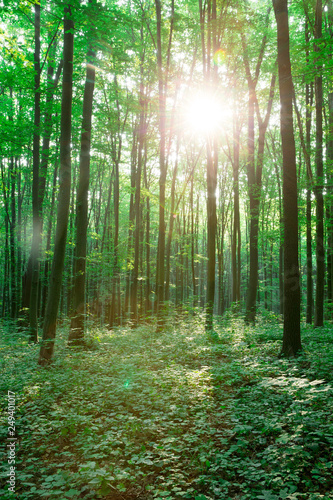 Papiers peints Forets green Forest trees. nature green wood sunlight backgrounds