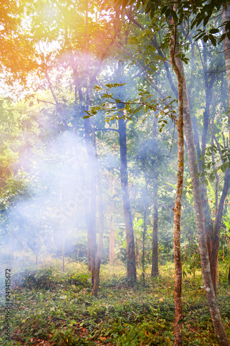 Tree smoke from bonfire fire burning grass in the forest on the summer