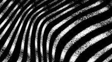 Black White Zebra Background