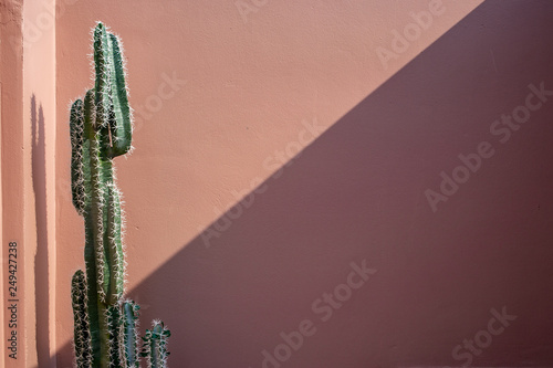 Stickers pour portes Cactus Pink wall
