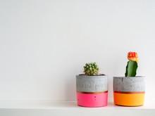 Colorful Modern Concrete Planters With Cactus Plants. Painted Concrete Pots For Home Decoration