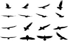 鷲のシルエット