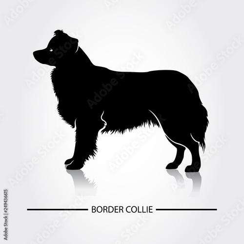 Tablou Canvas Border Collie Dog vector silhouette