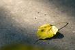 golden leaf with burred background