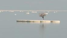 Lonely Tree On A Salt Lump