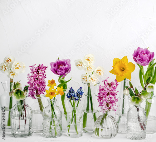Fotografia  Spring flower in glass vases