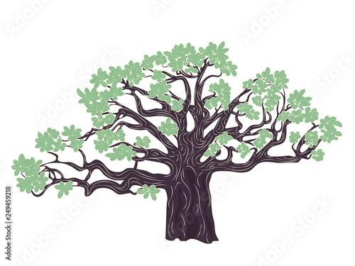 Photo Baobab tree design