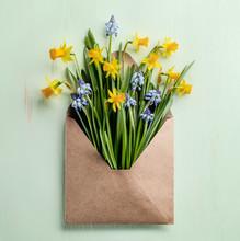 Spring Flower In Envelope