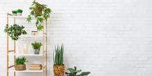 Bookcase With Various Plants Over White Wall