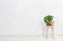 Plant On Stack Of Books Over White Brick Wall
