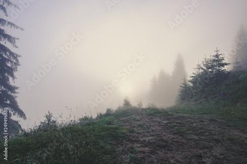 Fotobehang Bossen Foggy morning landscape