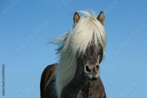 Photo  white horse