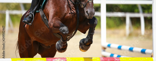 Fototapeta Horse over the jump, close-up of the angled front legs.. obraz