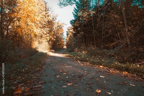 Fényképezés  Autumn hiking path alongside broadleaf trees in orange teal style